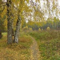 золотая осень :: Сергей