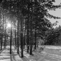 Зима :: Константин Карлин