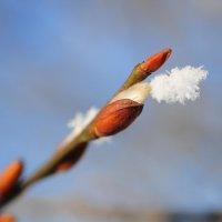 Не дождалась весны :: Андрей Куприянов