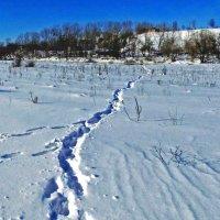 тропинка в снегу :: юрий иванов