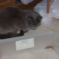 Кошка первый раз увидела крысу... Как и хозяин. :: Bakhit Zhussupov