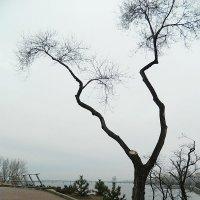 Зимнее дерево :: Александр Бурилов