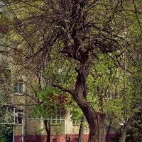 В одиночестве :: Svetlana D
