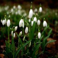 Первые признаки весны. :: Aleksandr Papkov