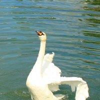 гордая птица :: Ольга Тумаева