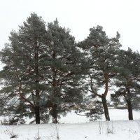 четыре товарища :: Александр Арсеньев