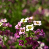 цветочный дом :: Анна Скорик