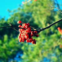 Яркие краски октября :: Юлия Михайлычева