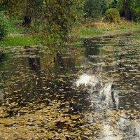 Старый пруд :: Александр Запыленов