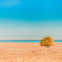 осень (солёное озеро Ульжай) :: Николай Заборовский