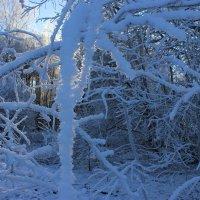 В снежном царстве :: Mariya laimite