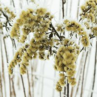 зимние растения :: Александр Абакумов