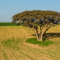 Израиль, январский пейзаж :: Владимир Горубин