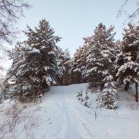 зима :: Ася Лебедева