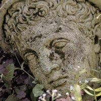 Голова в траве :: Цветков Виктор Васильевич