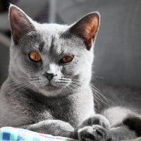 Портрет одного котика :: Валерий Князькин