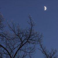 луна..... :: Геннадий Свистов