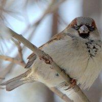помогаешь птицам зимой? :: Олег Петрушов