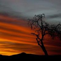 Кирилл Дорофеев - Африканский пожар
