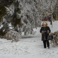 на прогулке :: Александр Кузин