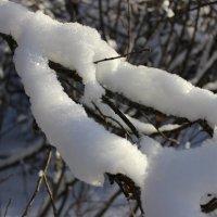 После снегопада :: Андрей Ко