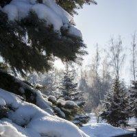 Морозный денек :: Светлана Яковлева