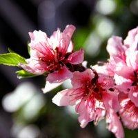 Весна... :: Марина Назарова