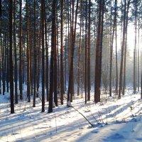 Сквозь лес :: Евгения Латунская