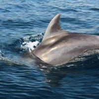 Фотоохота в море. :: алексей кривошея