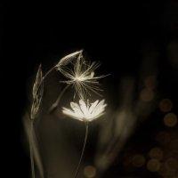 ..цветок-романтик и одинокая пушинка... :: Галина Юняева