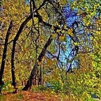 Улица  в  лесу  . :: Юрий Владимирович 34
