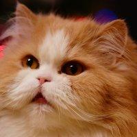 Мой кот. :: Юрий Афонин