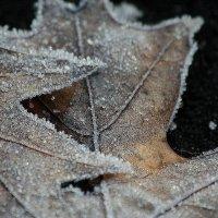 творчество зимы :: Maria Shakhova