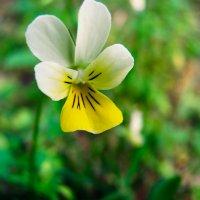 Цветок :: Юлия Суханова