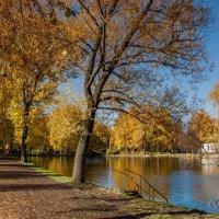 Осеннее утро в парке :: Olga Shatilina