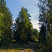 лесные дорожки :: gribushko грибушко Николай