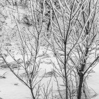 просто Зима :: Арсений Корицкий