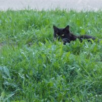 Если чёрный кот дорогу перейдёт... :: Екатерина ...