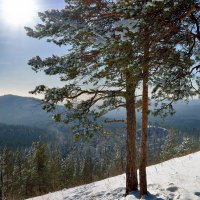Мороз и солнце. :: Сергей Адигамов