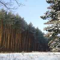 Морозным днем :: Ирина Голубева