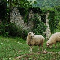 Заблудшие овечки :: Нелли *