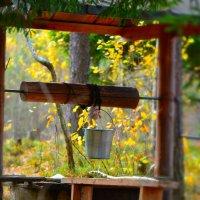 колодец в лесу :: Аркадий Алямовский