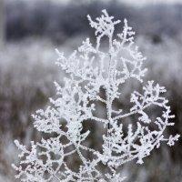 зима :: Елена Архипова