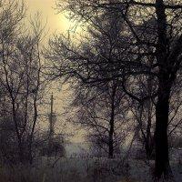 Зимнее солнце.. :: ФотоЛюбка *