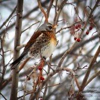 птица :: Гульназа Садыкова