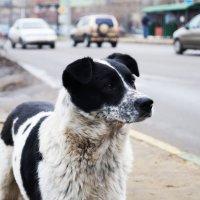 Animal :: Вероника Гущина