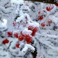 зимняя красота. :: Мария Сергеевна