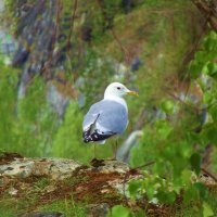 Чайка. :: Надежда Баликова