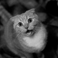 My cat :: Викка Шкунова