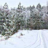 Зимний путь :: Мария Богуславская